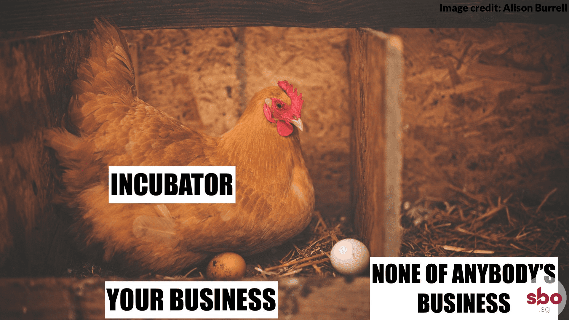 business-startup-incubator-chicken-eggs-pros-cons