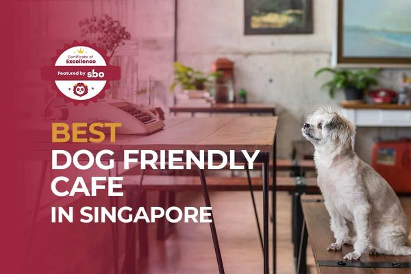 featured image_best dog friendly cafe in singapore