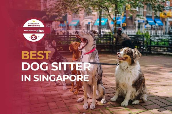 featured image_best dog sitter in singapore