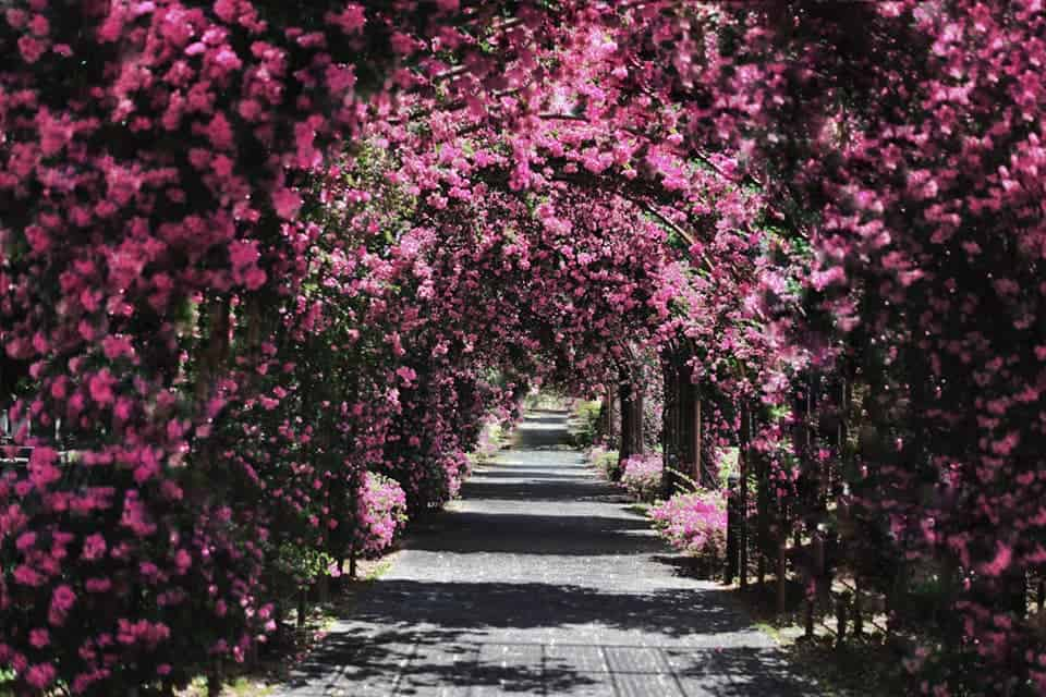 best places for first date in singapore_japanese cemetery park