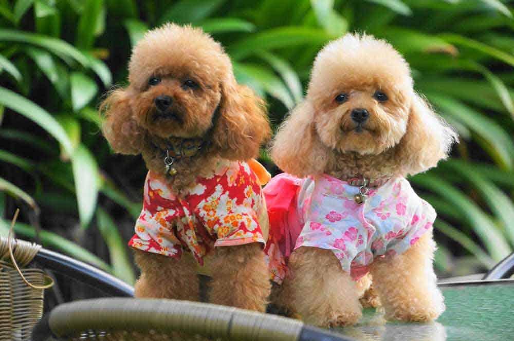 best dog groomers in singapore_masmasgroomers