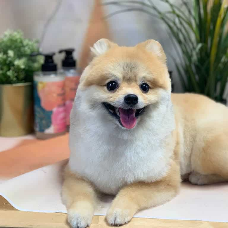best dog groomers in singapore_petronize