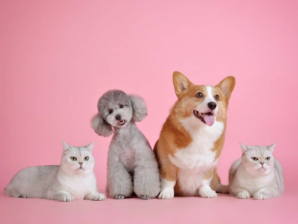 best dog grooming in singapore_the precious pets