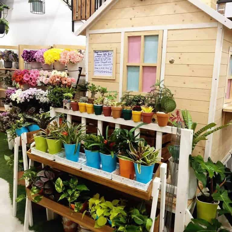 Best Places to Buy Indoor Plants in Singapore (A Tilly A Day)