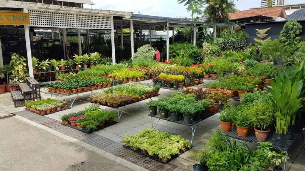 Best Places to Buy Indoor Plants in Singapore (Chin Ling Nursery   Landscape Services)