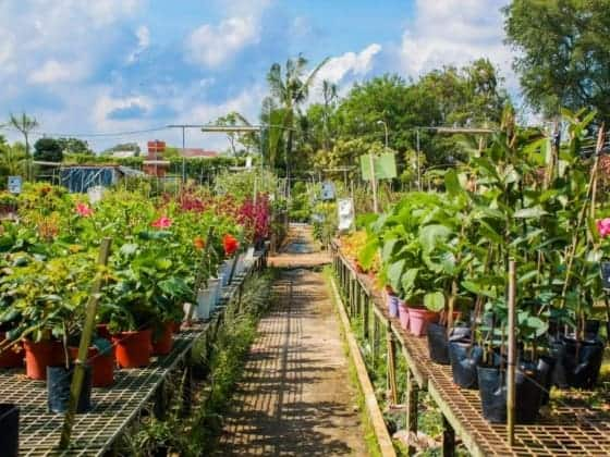 Best Places to Buy Indoor Plants in Singapore (World Farm Co Pte Ltd (Hua Hng Trading Co Pte Ltd))
