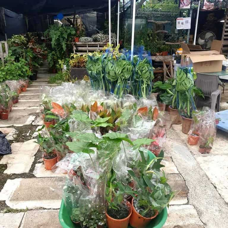 Best Places to Buy Indoor Plants in Singapore (Hortus-Culture Sg)