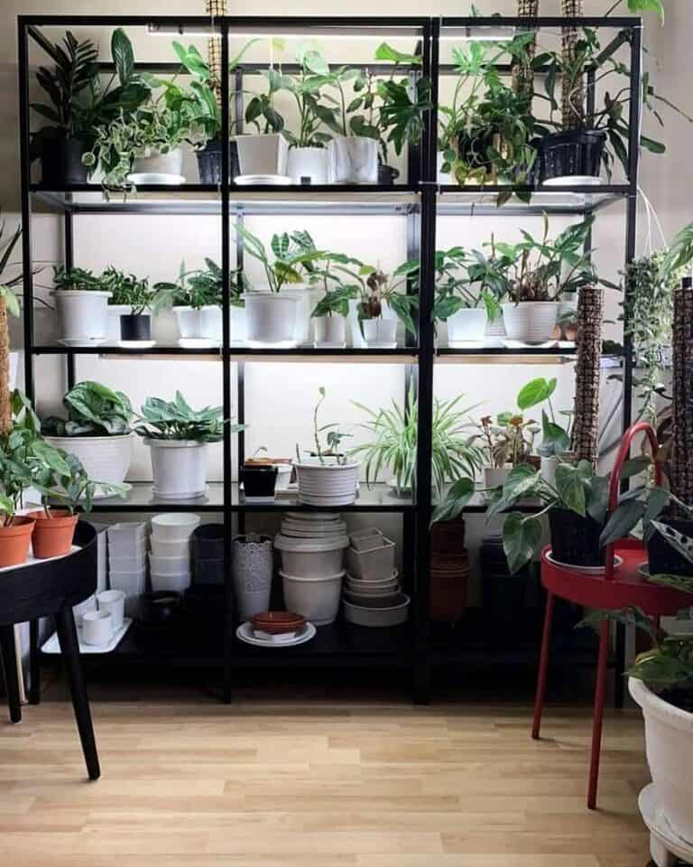 Best Places to Buy Indoor Plants in Singapore (The Nursery Singapore)