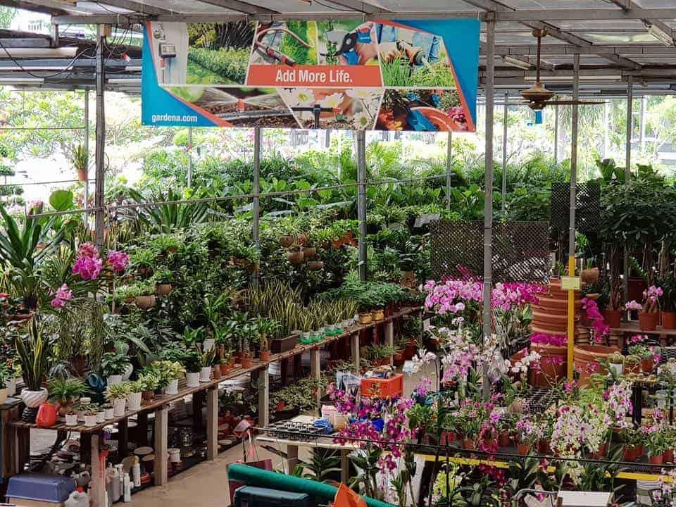 Best Places to Buy Indoor Plants in Singapore (Song Lang Garden)
