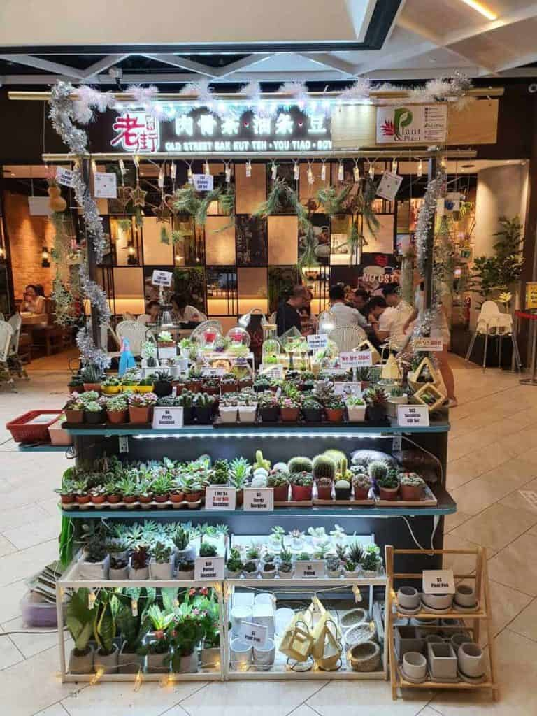 Best Places to Buy Indoor Plants in Singapore (Pick a Plant)