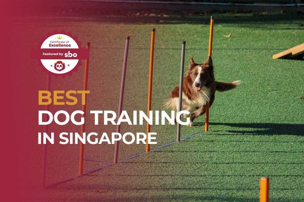 featured image_best dog training in singapore