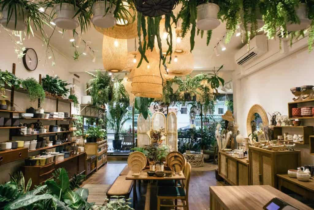 Best Places to Buy Indoor Plants in Singapore (Potta Plantta)