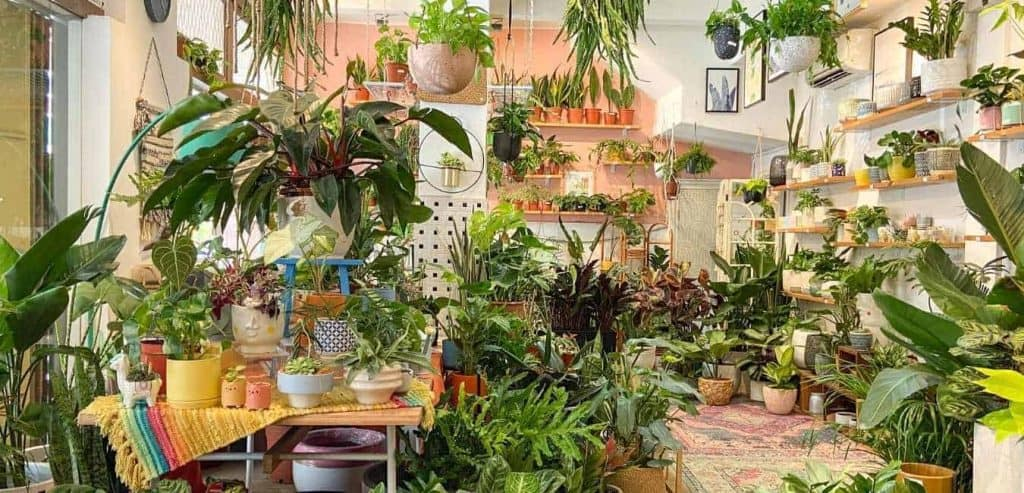 Best Places to Buy Indoor Plants in Singapore (Tumbleweed Plants)