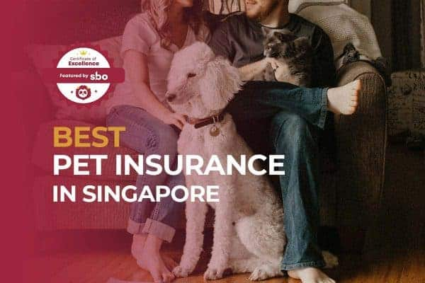featured image_best pet insurance in singapore