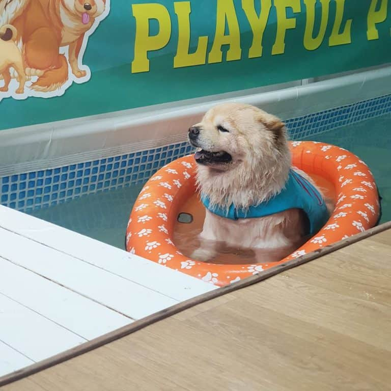 best pet boarding in singapore_Wagging Tails N Playful Paws