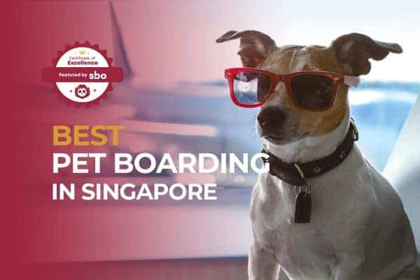 featured image_best pet boarding in singapore