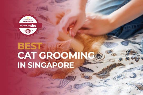 featured image_best cat grooming in singapore